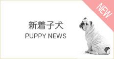 新着子犬情報チャーミー